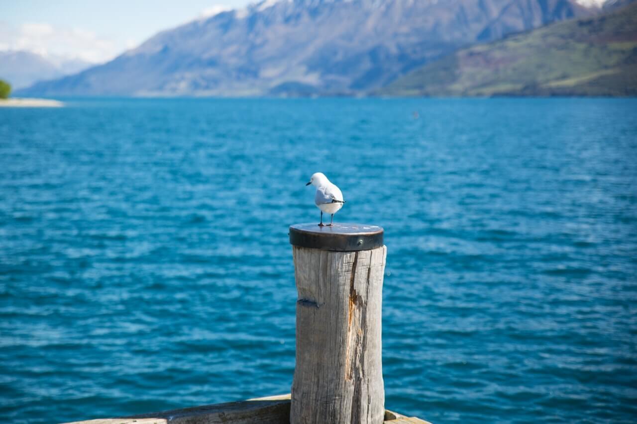 Een meeuw op een paal uitkijkend op de zee van Nieuw-Zeeland.
