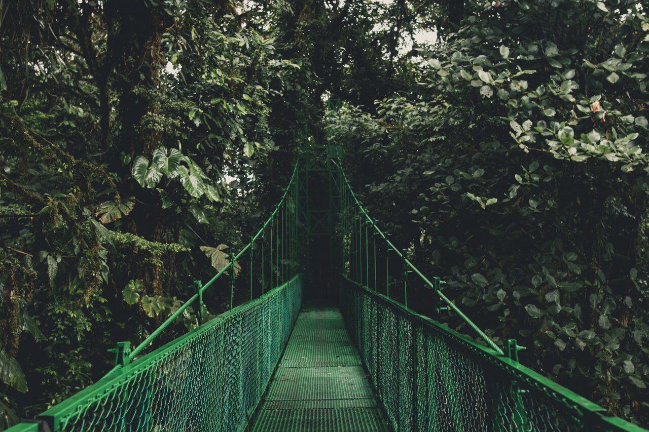 Een brug middenin de jungle van Monteverde in Costa Rica