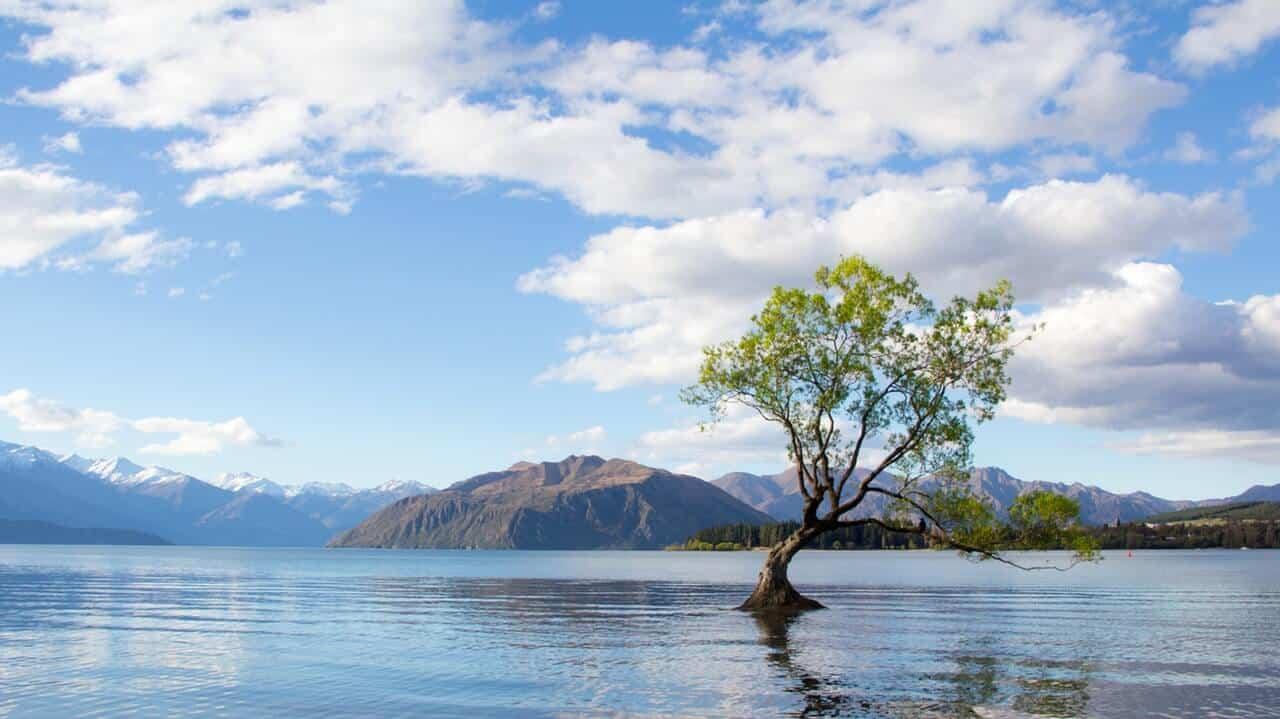 Een meer omringd door bergen met middenin het meer een boompje.