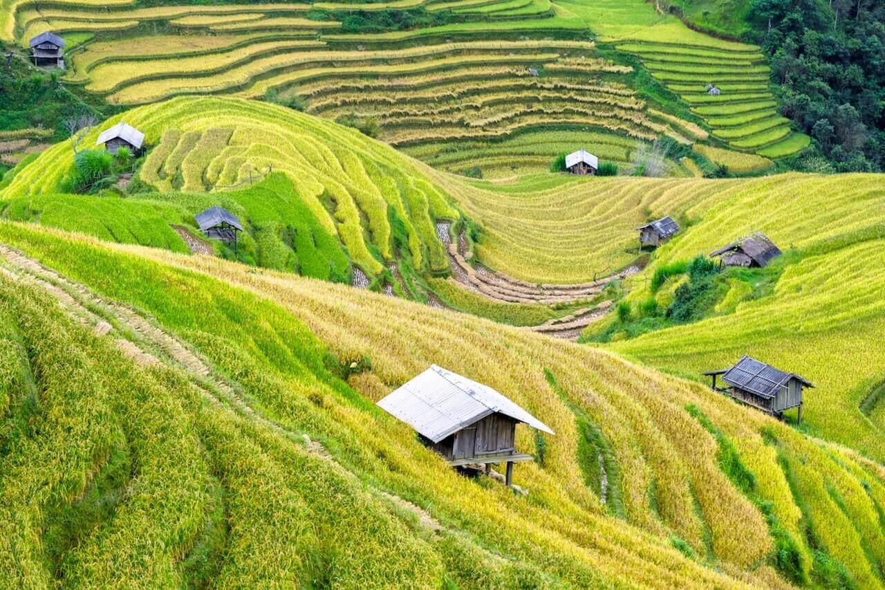 Rijstvelden in Vietnam met daarbij kleine huisjes.
